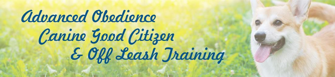 Advanced Dog Obedience, CGC Certification, Off-Leash Dog Training ...