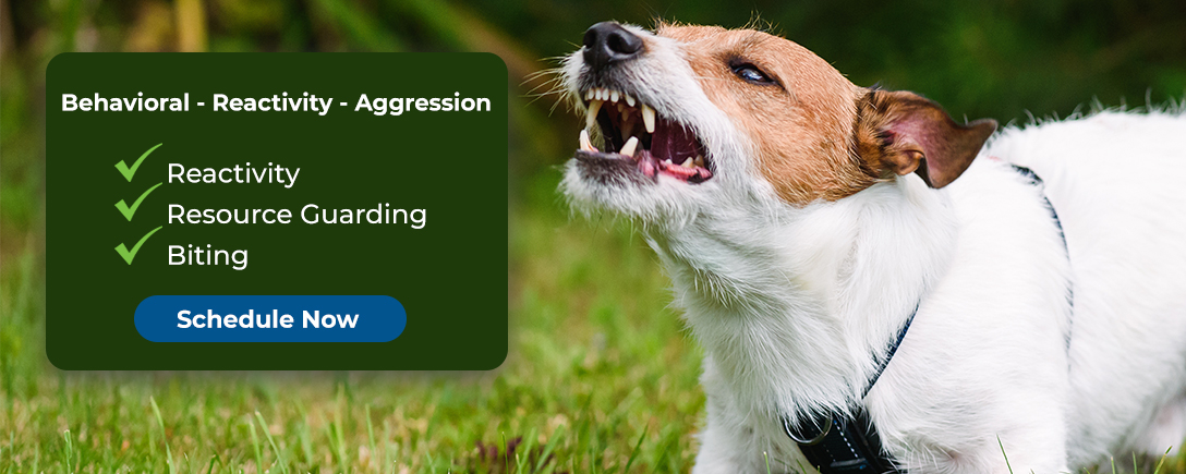 Behavioral - Reactivity - Aggression
