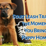 When should you leash train your puppy?