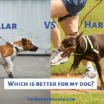 Collar vs Harness – Which is Better for My Dog?