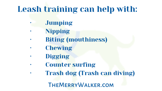 List of Ways Leash Training Can Help your dog