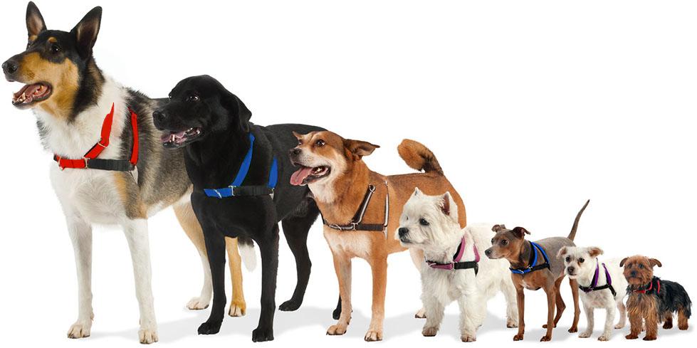 merrywalker-dogs-2